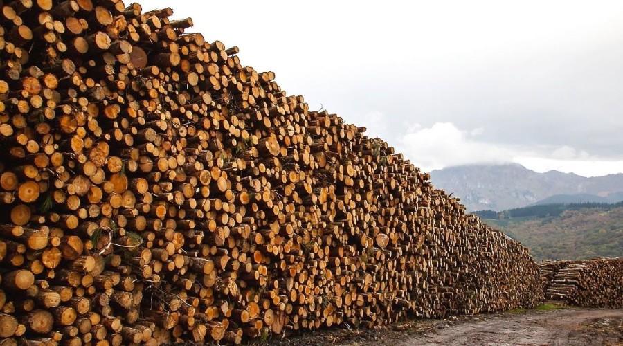Hasta 13 millones de hectáreas de bosques desaparecen cada año por la acción del hombre